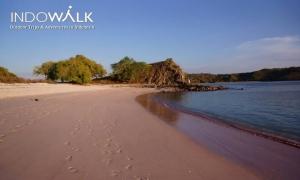 Paket Wisata Komodo Murah